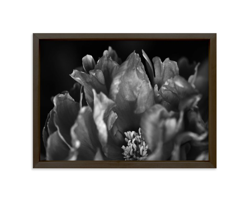 """""""Peony #1"""" - Art Print by Lynn Lehto in beautiful frame options and a variety of sizes."""