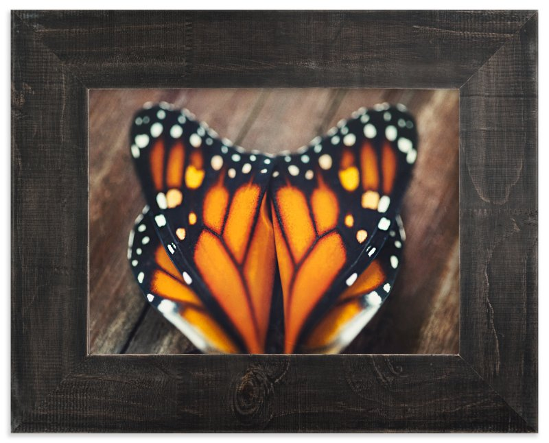 """Monarch Study #3"" - Art Print by Stacy Kron in beautiful frame options and a variety of sizes."