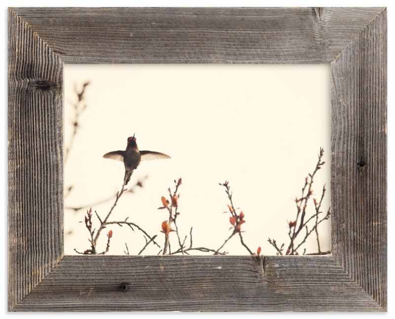 """""""Landing on Branches."""" - Art Print by Jennifer Alexander in beautiful frame options and a variety of sizes."""