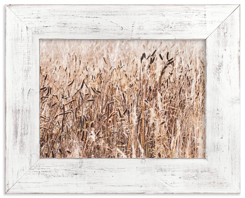 """Field of Wheat"" - Art Print by Annie Montgomery in beautiful frame options and a variety of sizes."