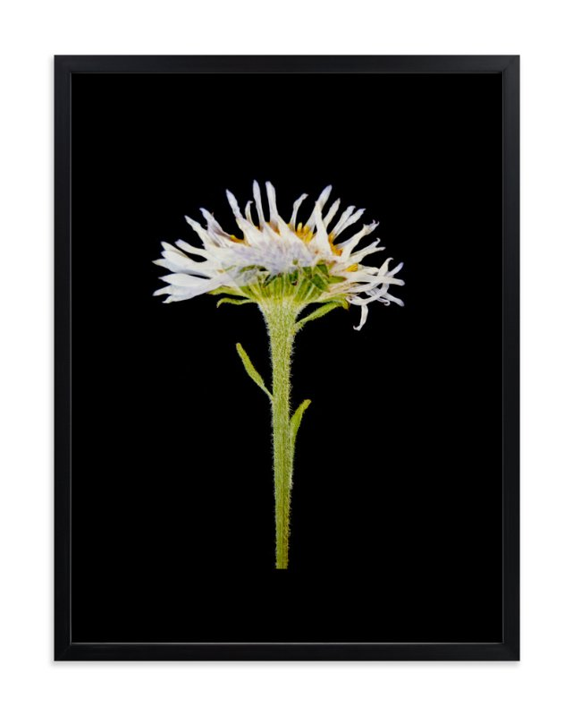 """""""Member 6"""" - Art Print by Shannon in beautiful frame options and a variety of sizes."""