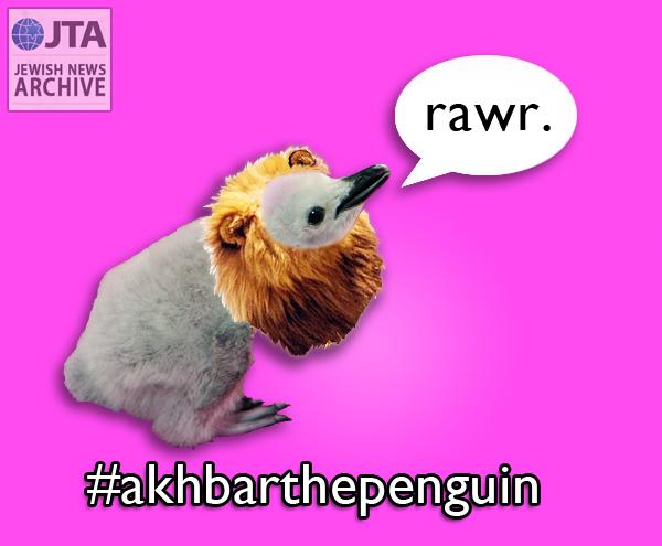 Akhbar the penguin