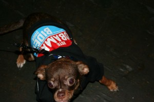 Pooches for Obama