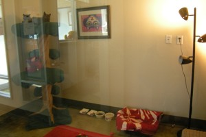 Two kitties (top left corner) live in a luxurious room in the SPCA while waiting for adoption. (M.N.K)