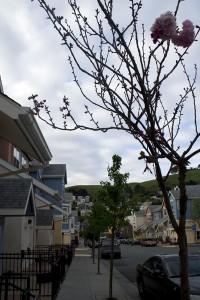 Bernal Dwellings Public Housing (M.N.K)