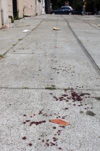 blood trails lined Vermont Street. Photo Credit: Amanda Martinez