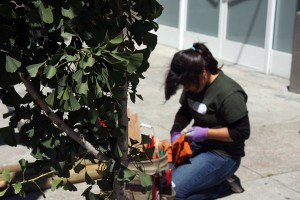Carina Tejada of Balboa High working on Shotwell and 20th Street.