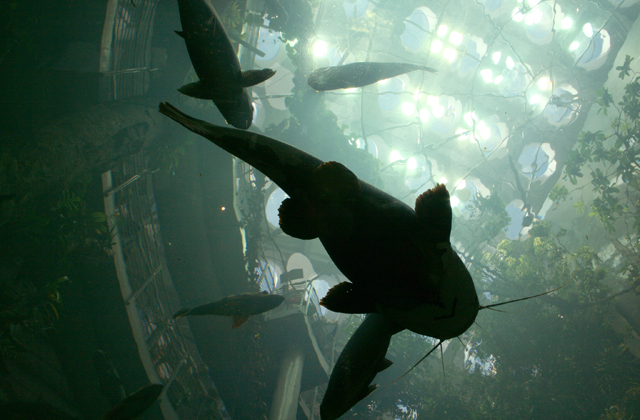 Missionites: Take a trip to the CA Academy of Sciences!