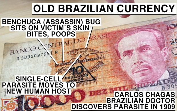 Parasite life cycle printed on Brazilian money, now out of circulation.