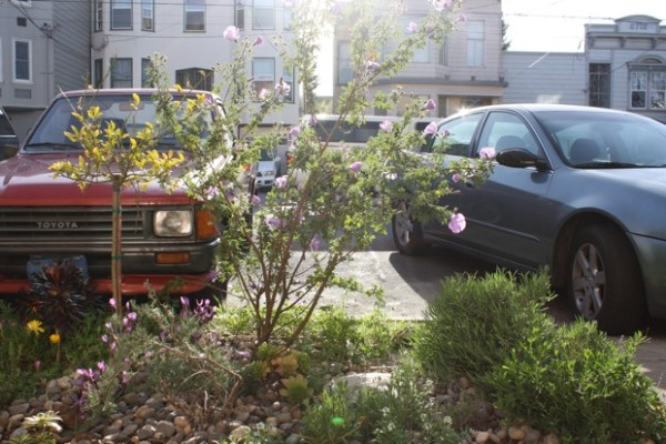 Plant SF began in the Mission, as a way to return the Mission's rainfall to the City's underground aquifer, and cut down on flooding in neighborhood basements.
