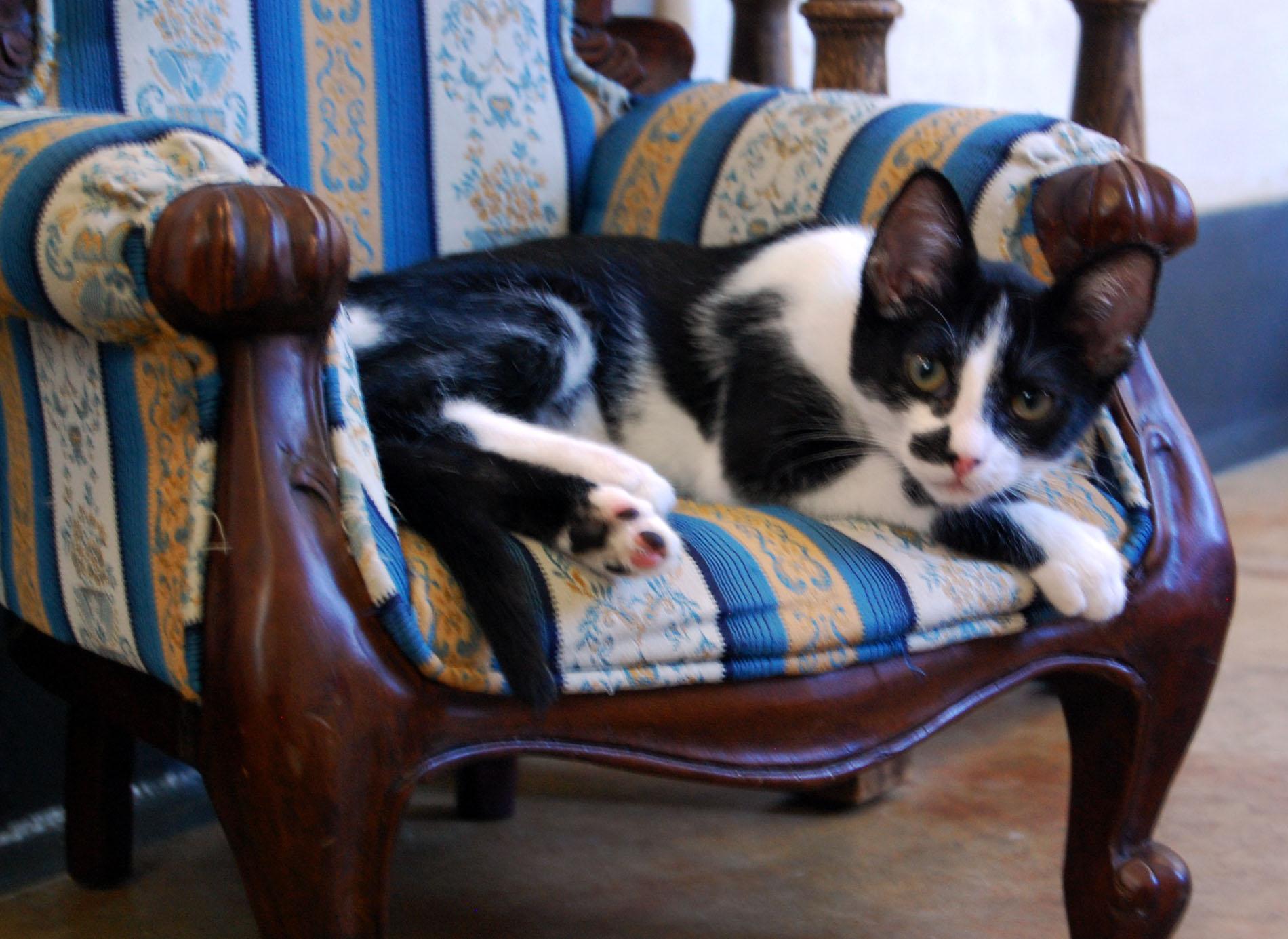 At the SPCA: Kitten Glut
