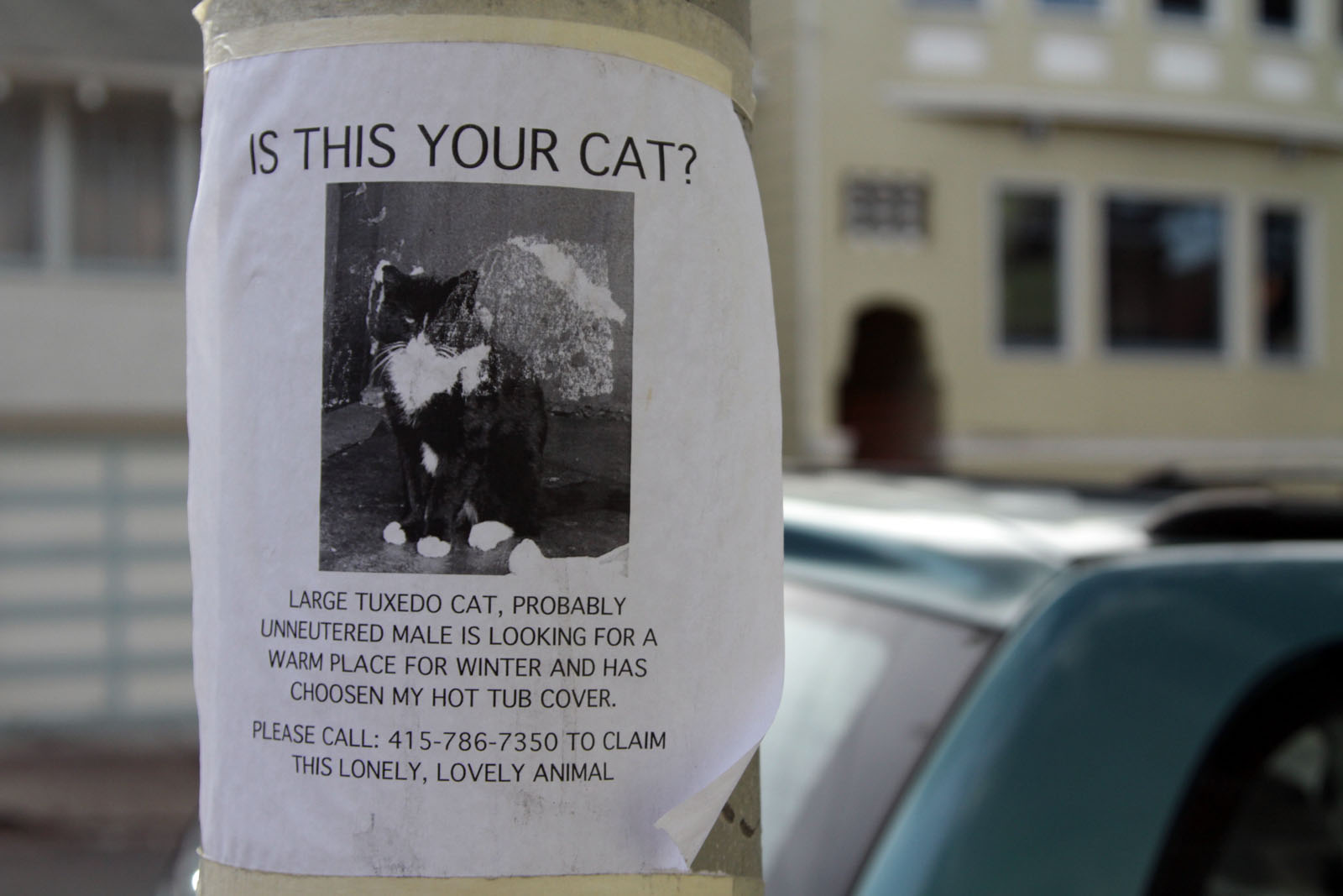 Is this your cat?