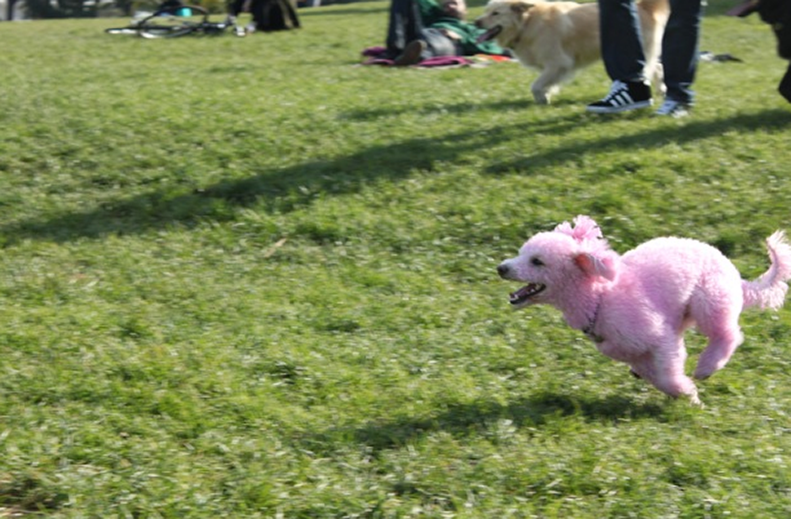 Drugs and Dogs – It's Summer in Dolores Park