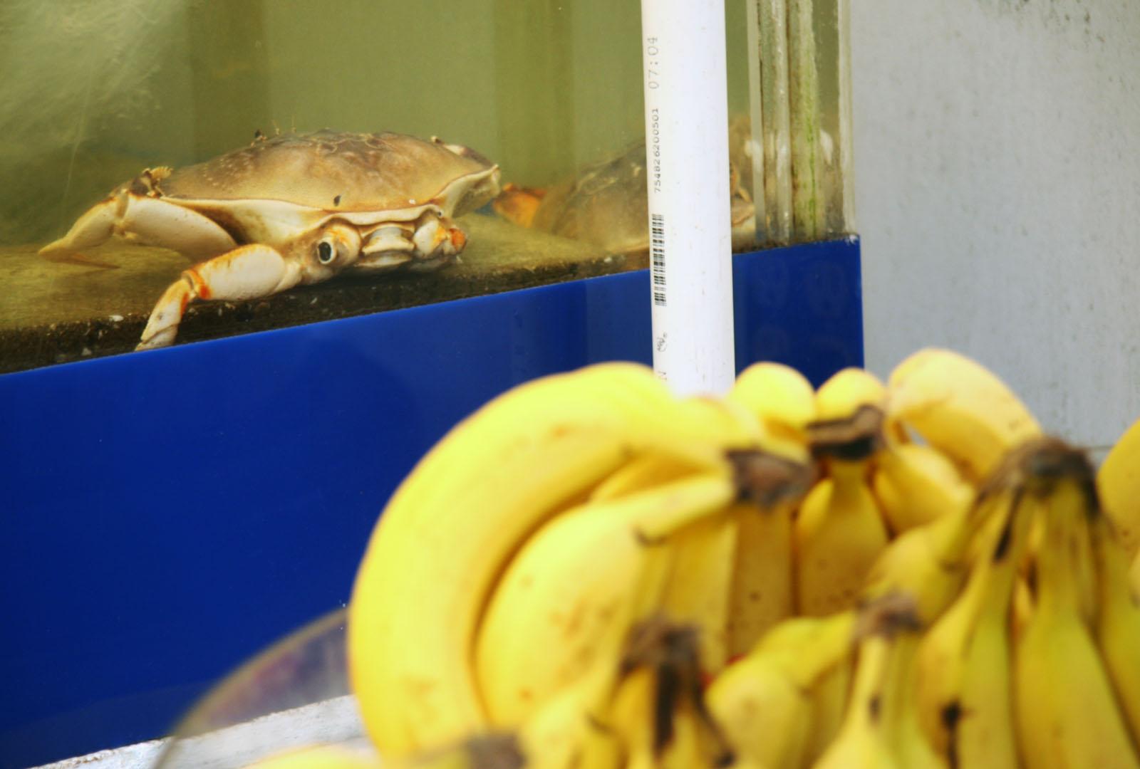 Crab Seeks Help on 24th Street