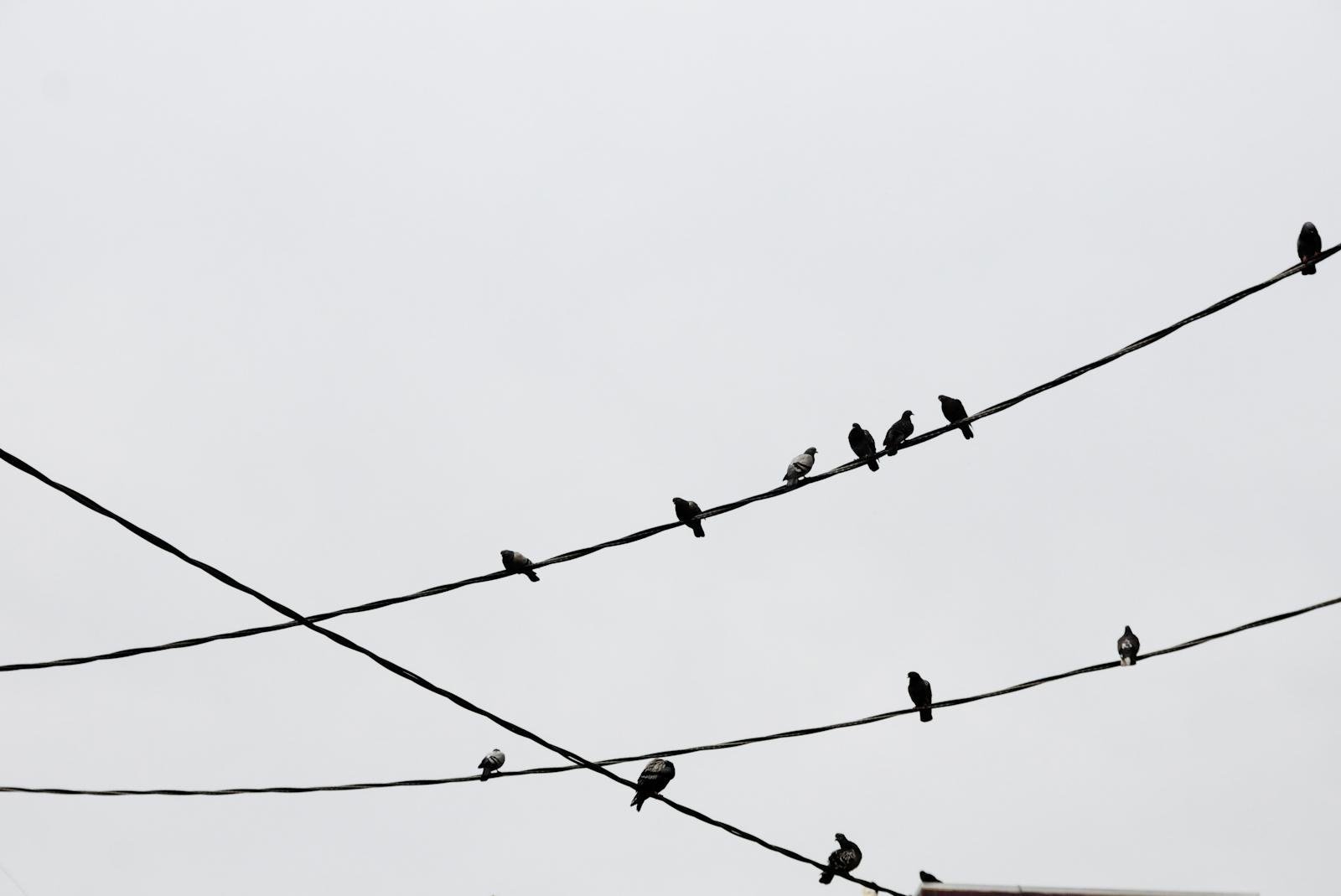 Geometric Pigeons