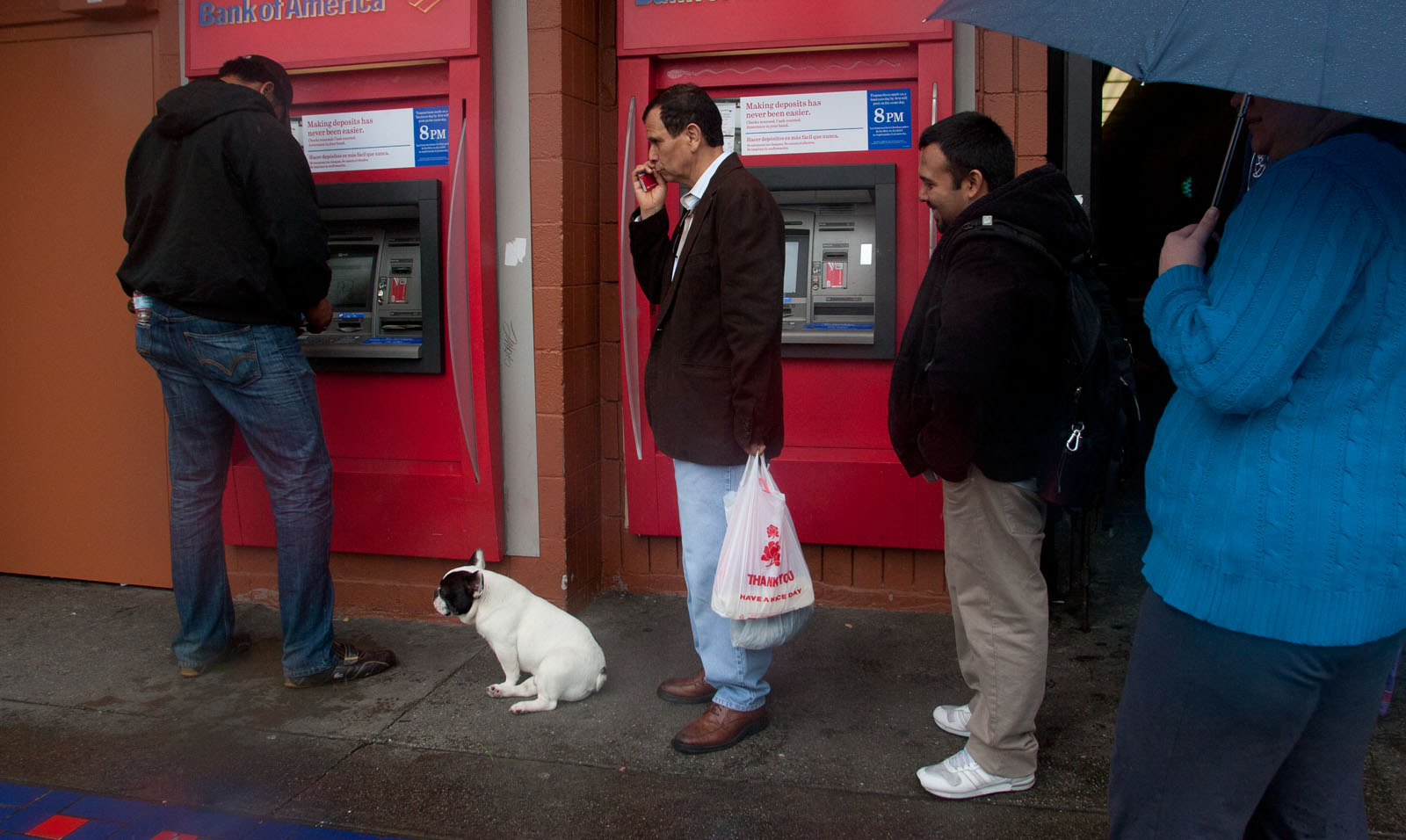 Dog Waits for Cash