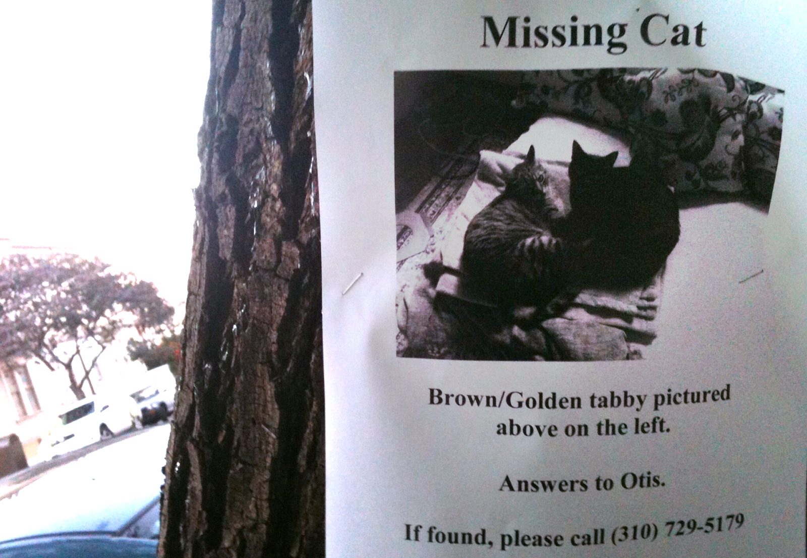 Missing Cat : (