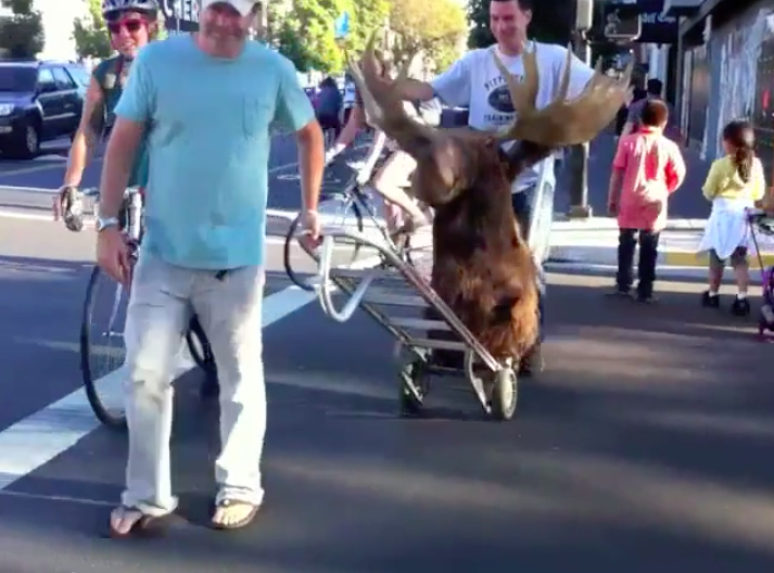 Moose Moving on Valencia
