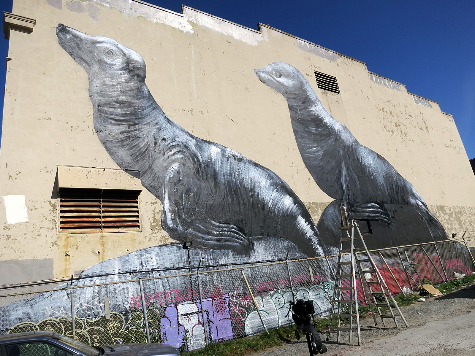 The Sea Lions On Bartlett Will Die Missionlocal