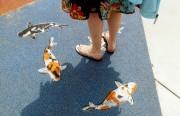 walkingwithfishes