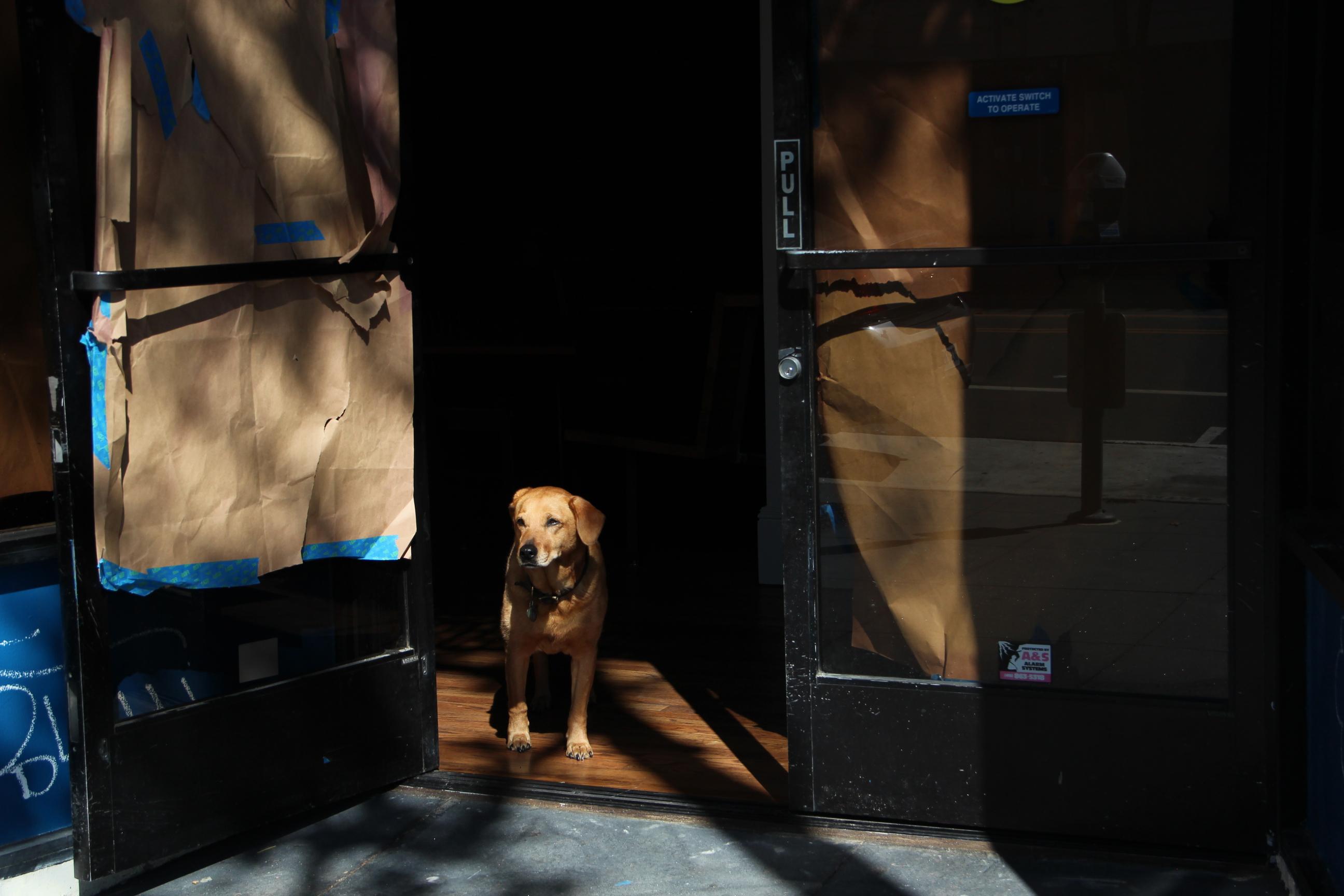 SNAP: Watchdog