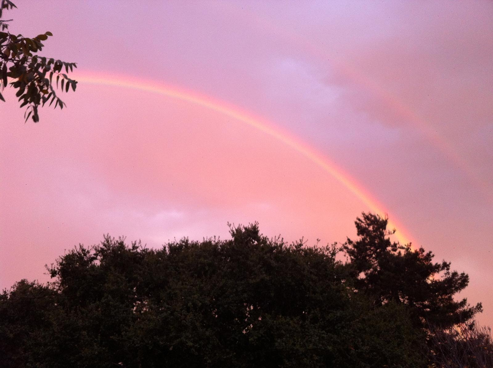 Jonathan Richman and Rainbow Grocery