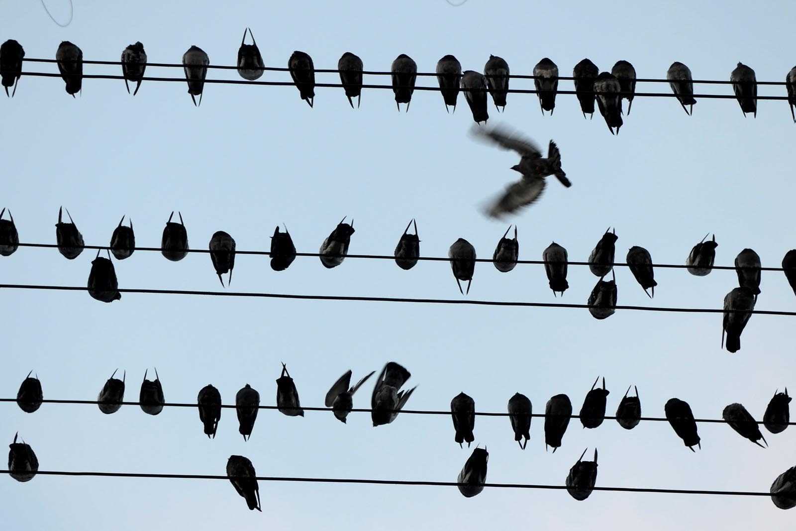 SNAP: The Birds