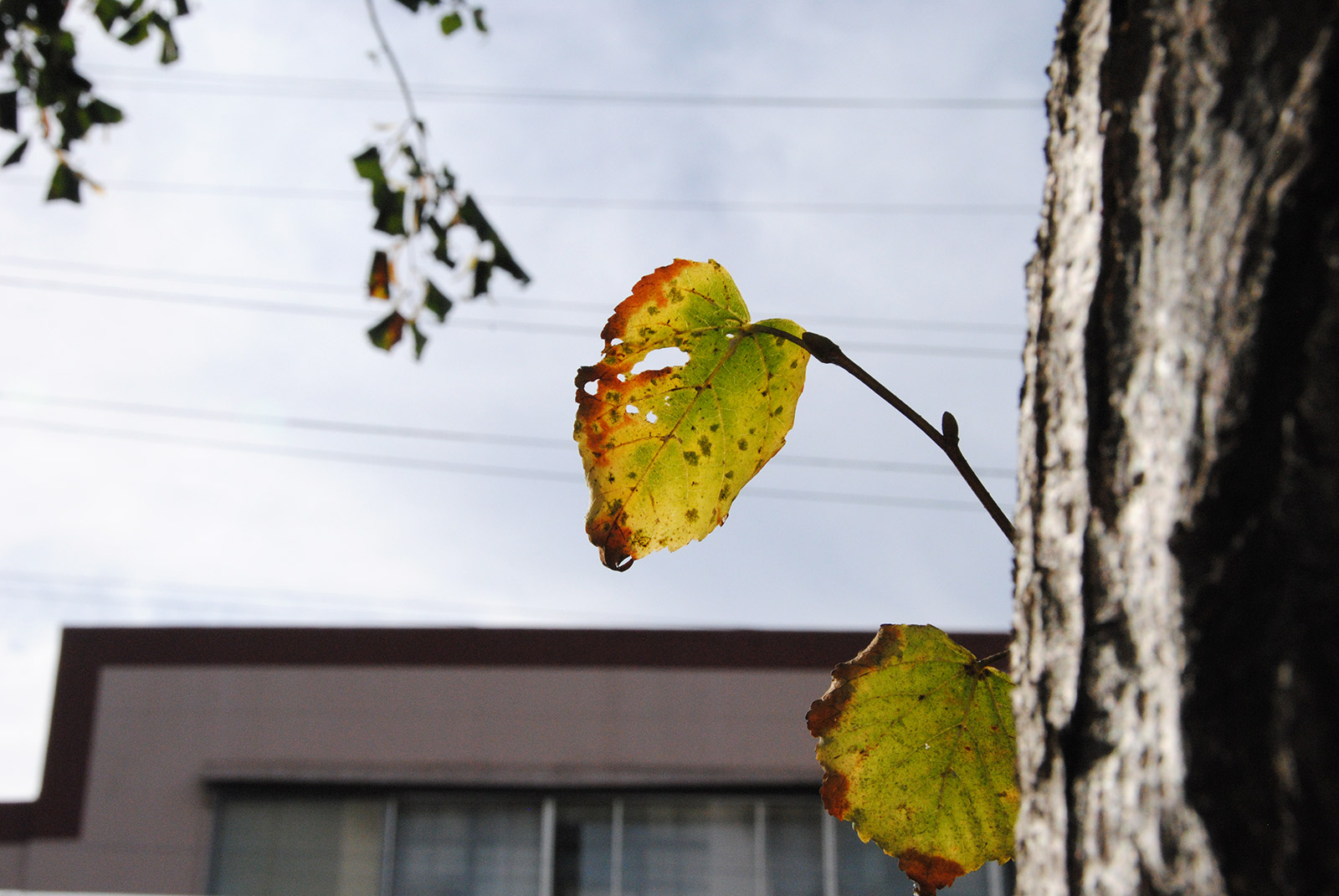 SNAP: Hints of Autumn