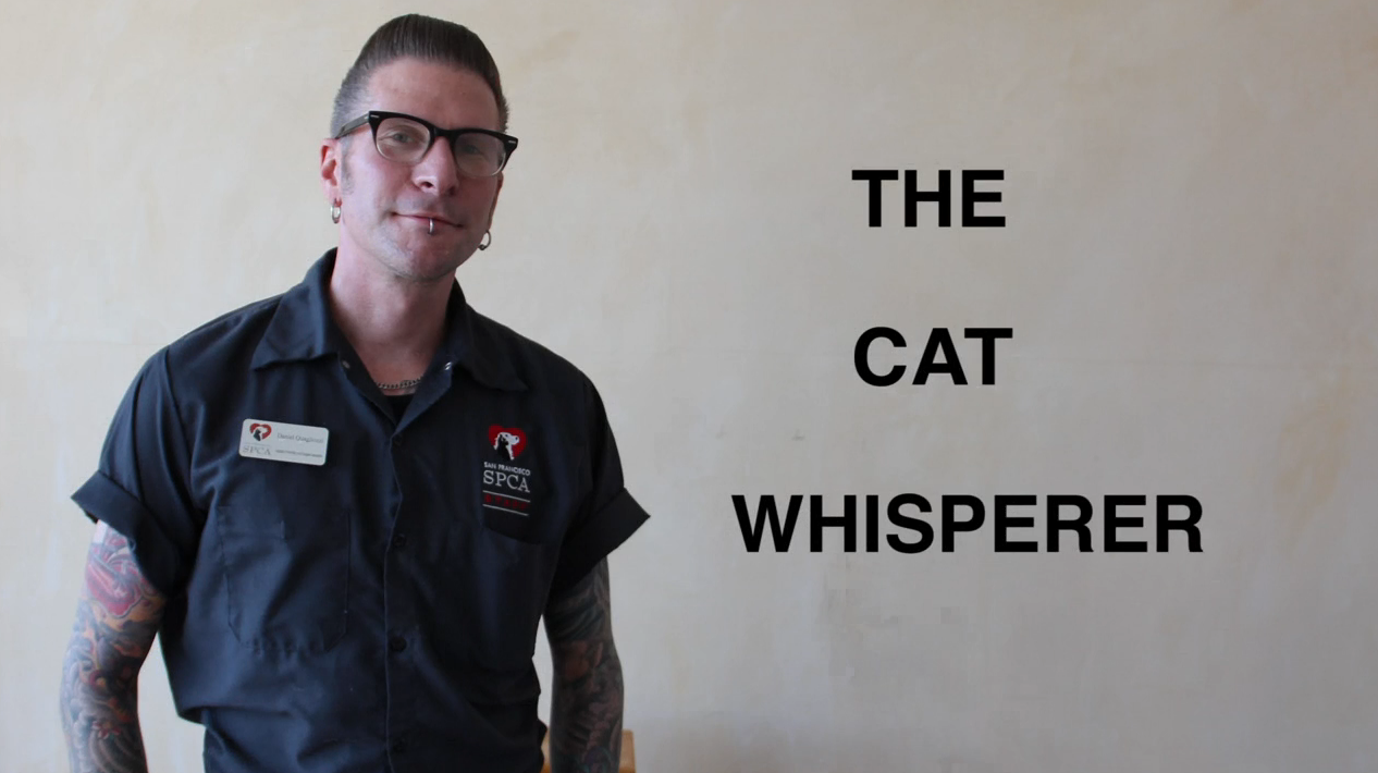 VIDEO: Daniel the Cat Whisperer