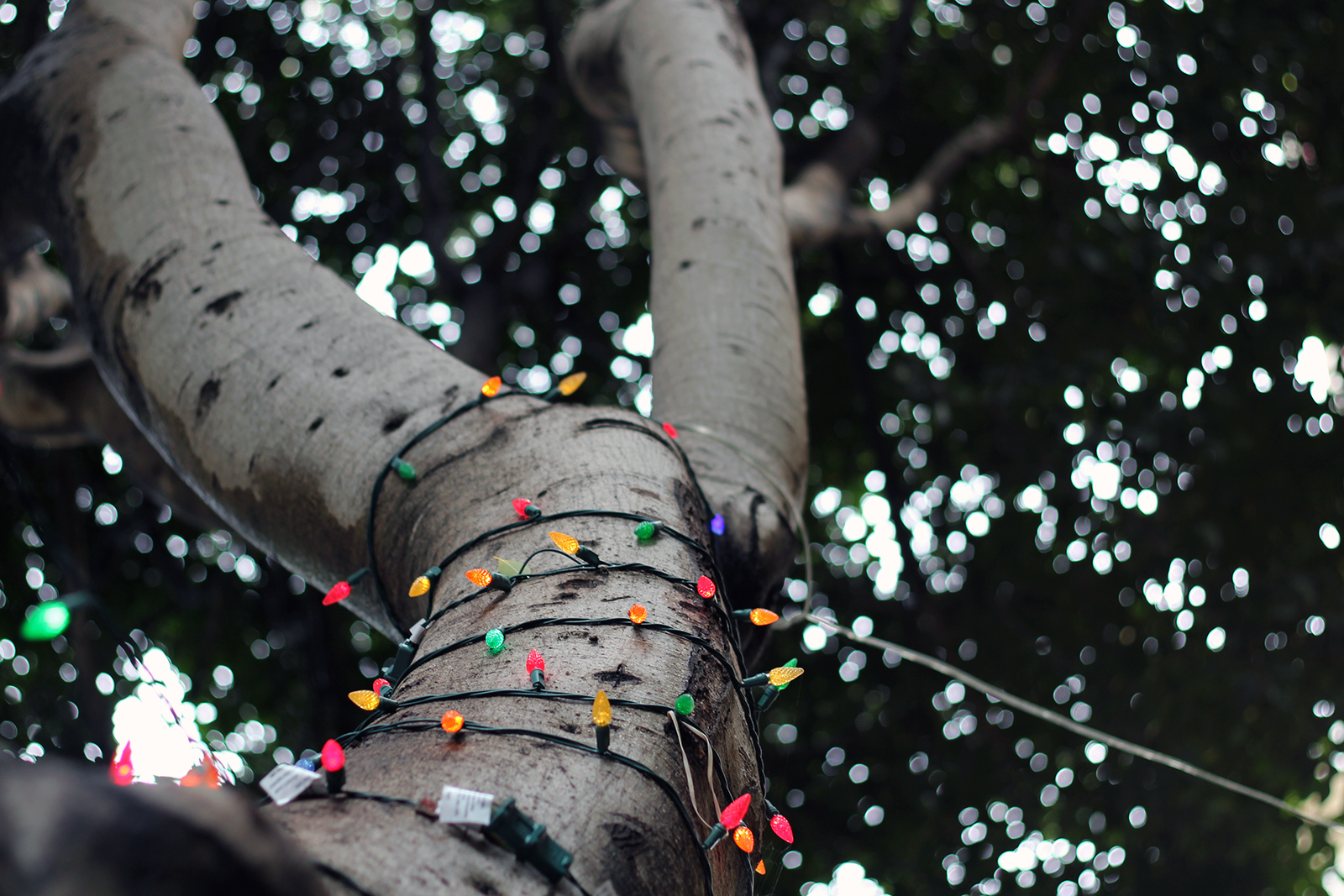 A tree decorated with lights on 24th Street.