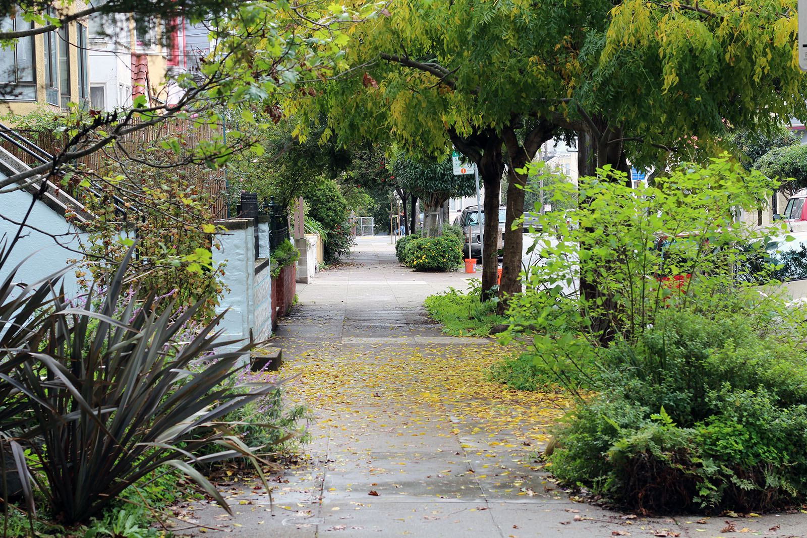 The sidewalk on Shotwell and 25th streets.