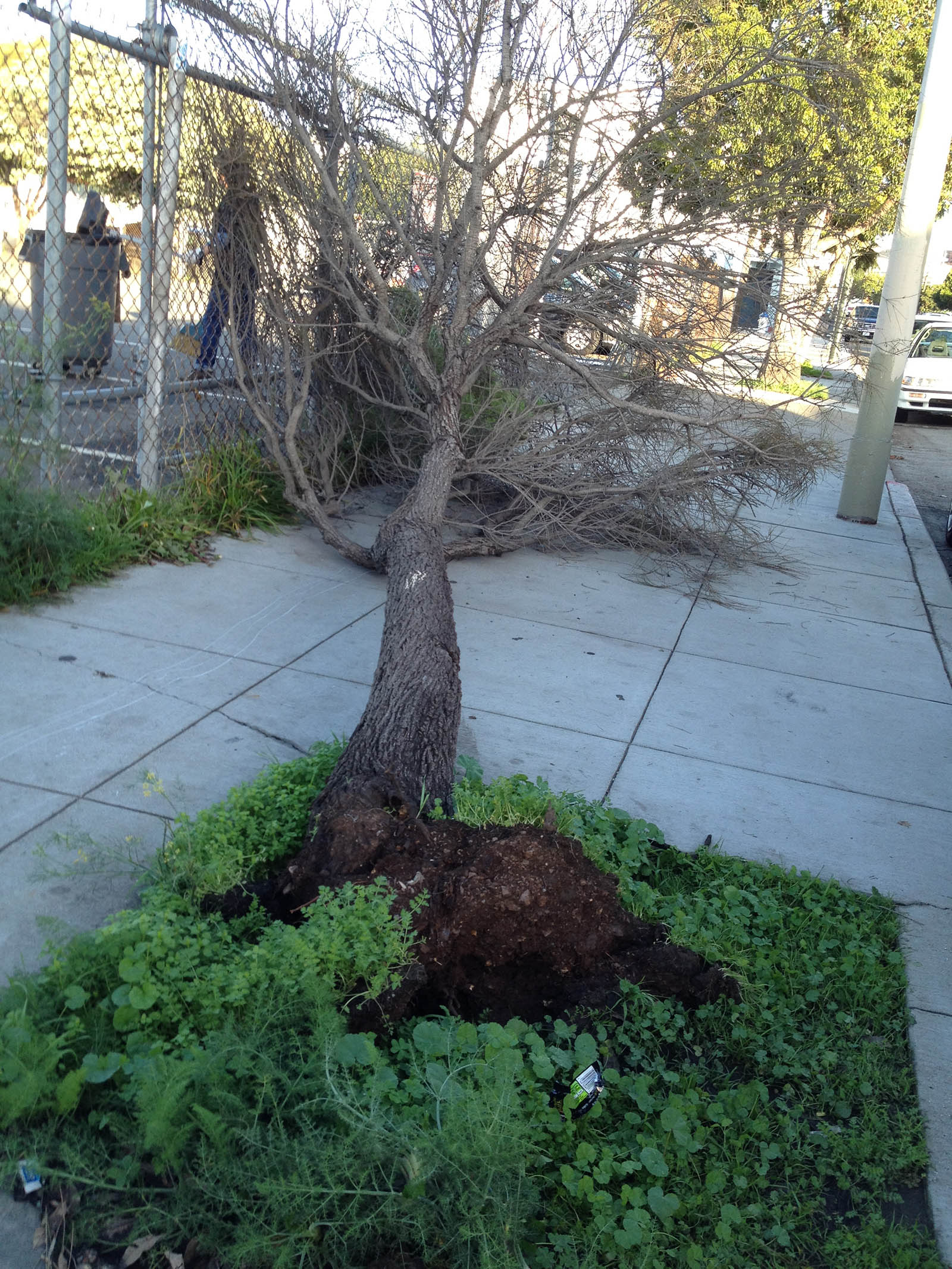 SNAP: If a Tree Falls
