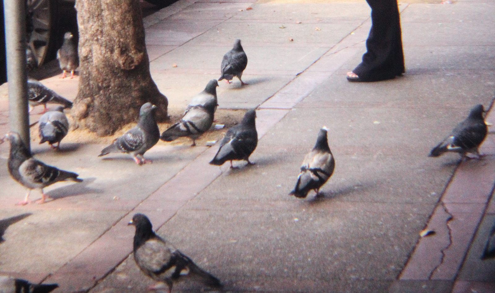 SNAP: Hungry Pigeons