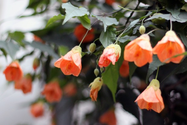 Flowers in the rain.