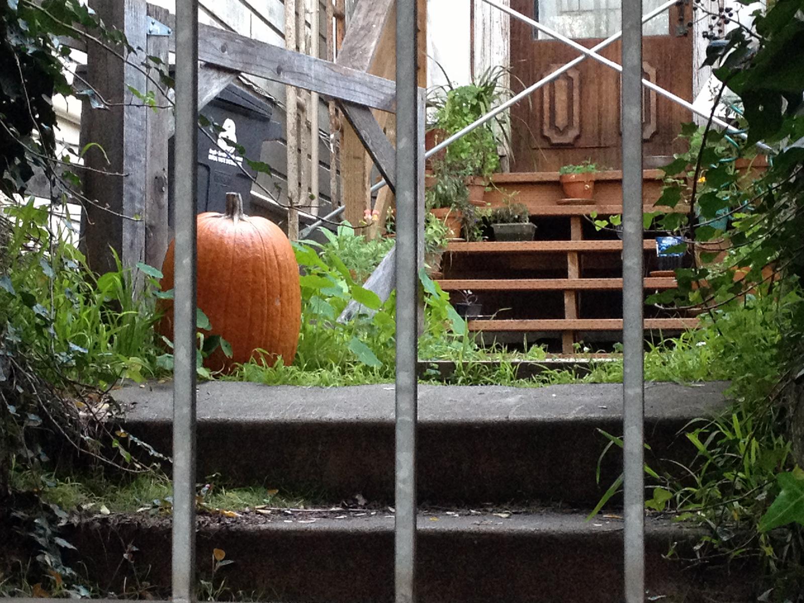 A garden on Folsom Street.