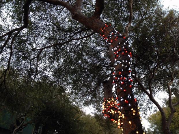 A tree with lights on Folsom Street.