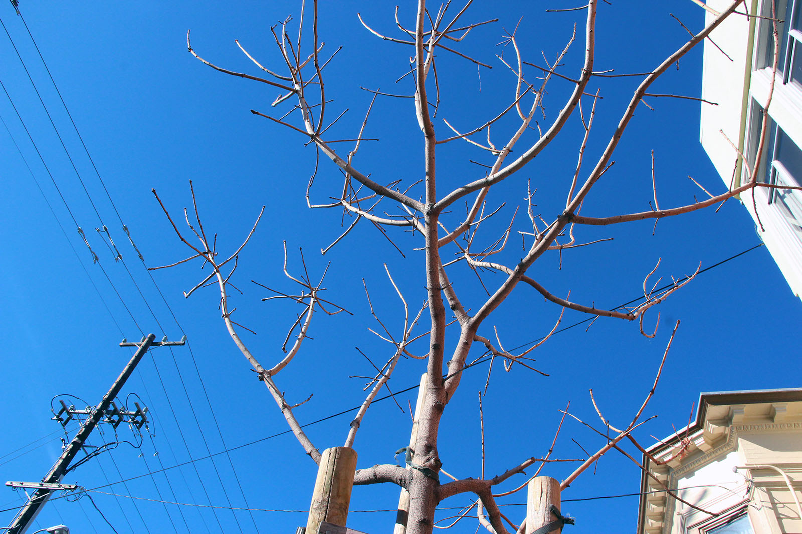 A leafless tree on the corner of Folsom and 16th Streets.