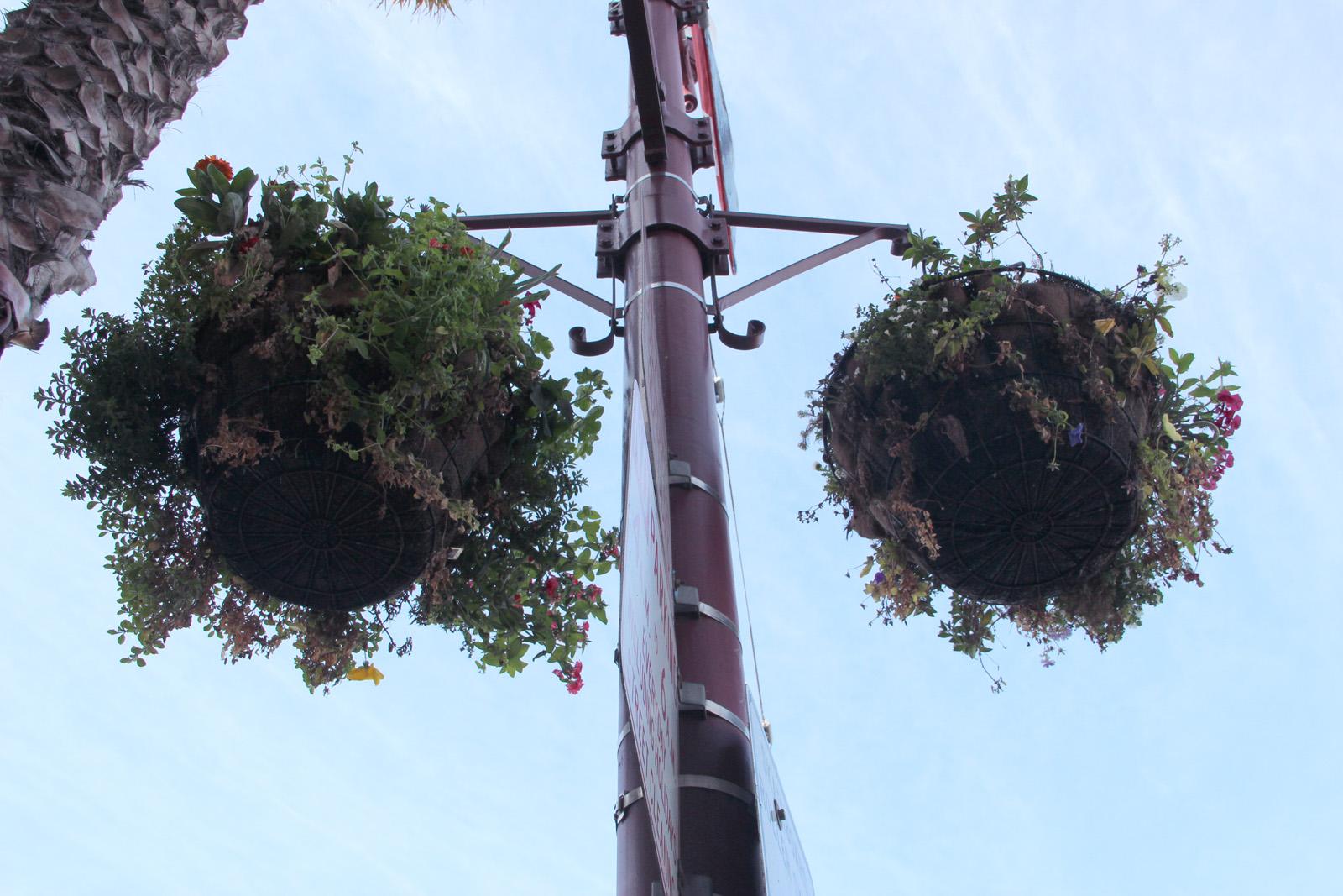 Hanging plant pots on Mission St.