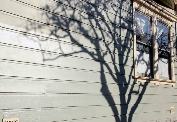 A shadow of a tree on a wall on South Van Ness Ave.