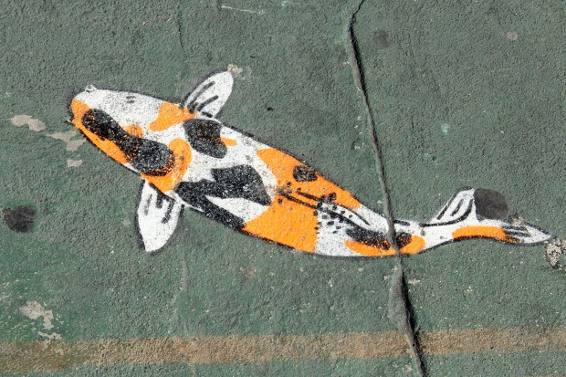 A fish is painted on the street on Mission Street.