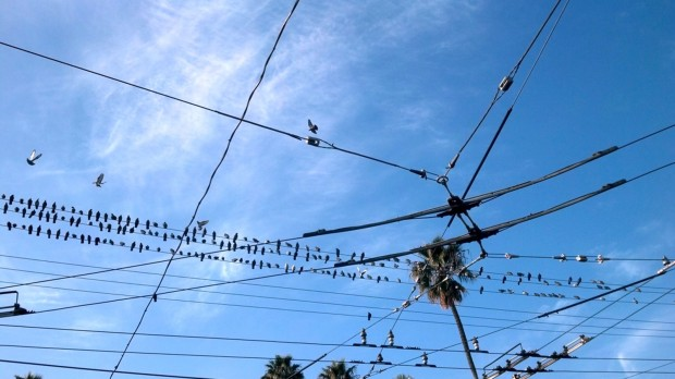 The birds at 16th and Mission are all atwitter.