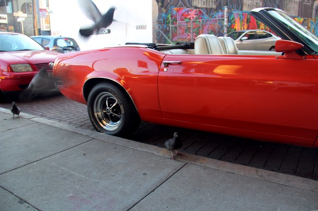 Pigeons flock to a Mustang parked behind Zeitgeist.