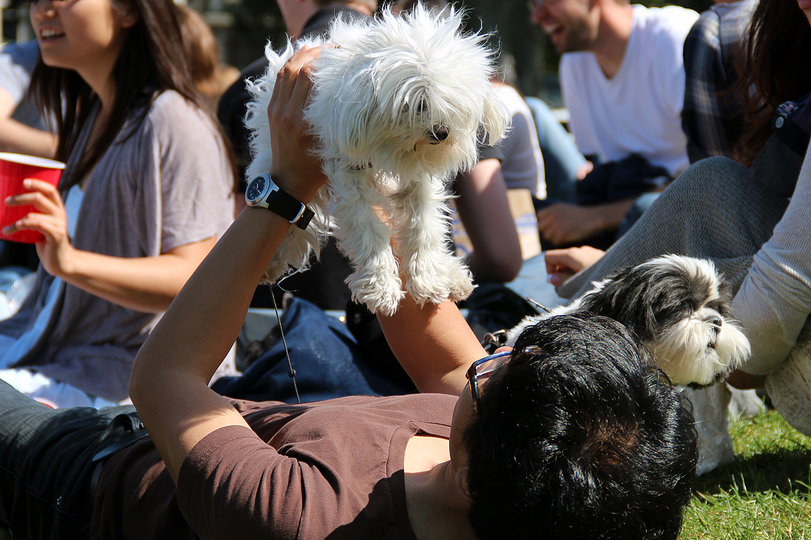 Supes Will Vote on Resolution to Oppose Restrictions on Dogs at Federal Parklands