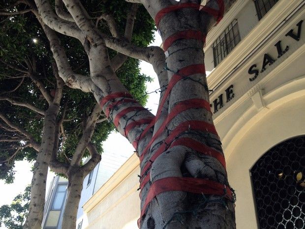 A tree on Valencia Street is covered in red ribbon.