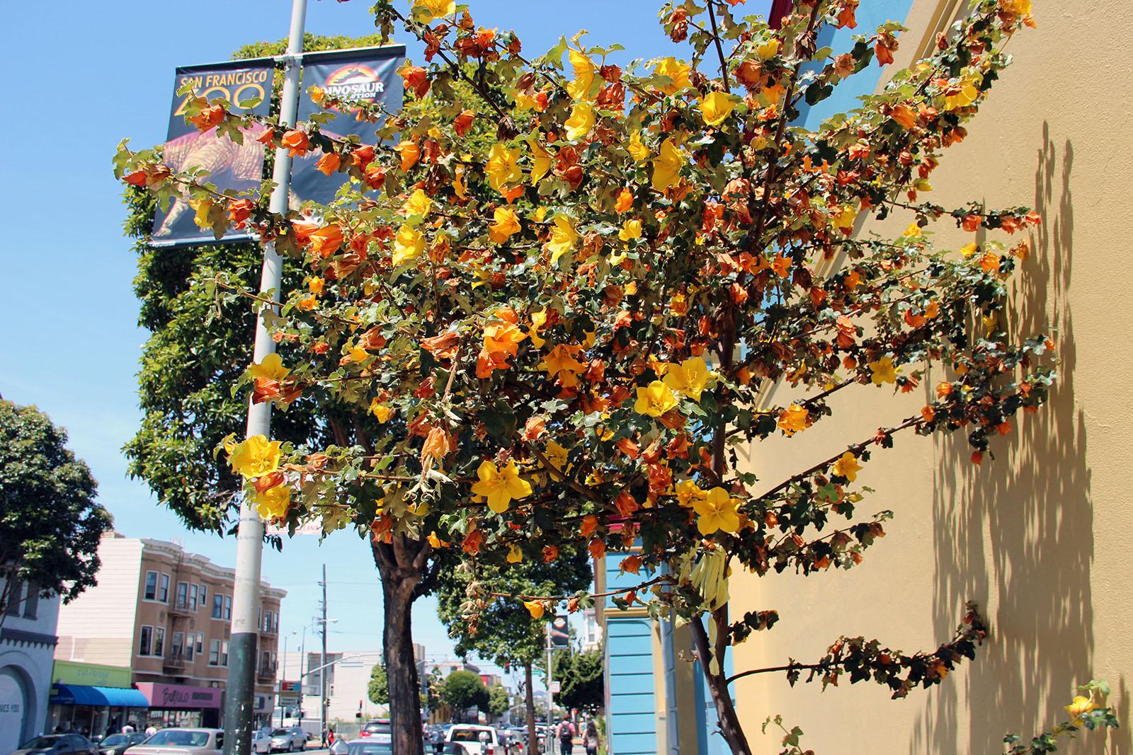 SNAP: Orange in Bloom