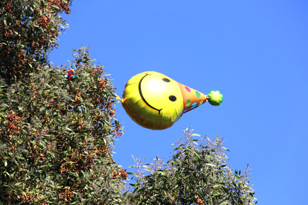 """A balloon stuck in a tree floats in the wind at Dolores Park. Photo by birthday girl, <a href=""""http://missionlocal.org/author/dorothy_atkins/"""">Dorothy Atkins</a>."""