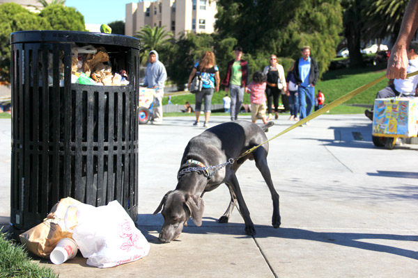 """A dog sniffs an overflowing trash can in Dolores Park on Sunday afternoon. """"There should be more trash cans,"""" said 39-year-old San Francisco resident Osana Avanesova. """"I feel like there's never enough and that's weird. It's a simple thing to fix."""""""