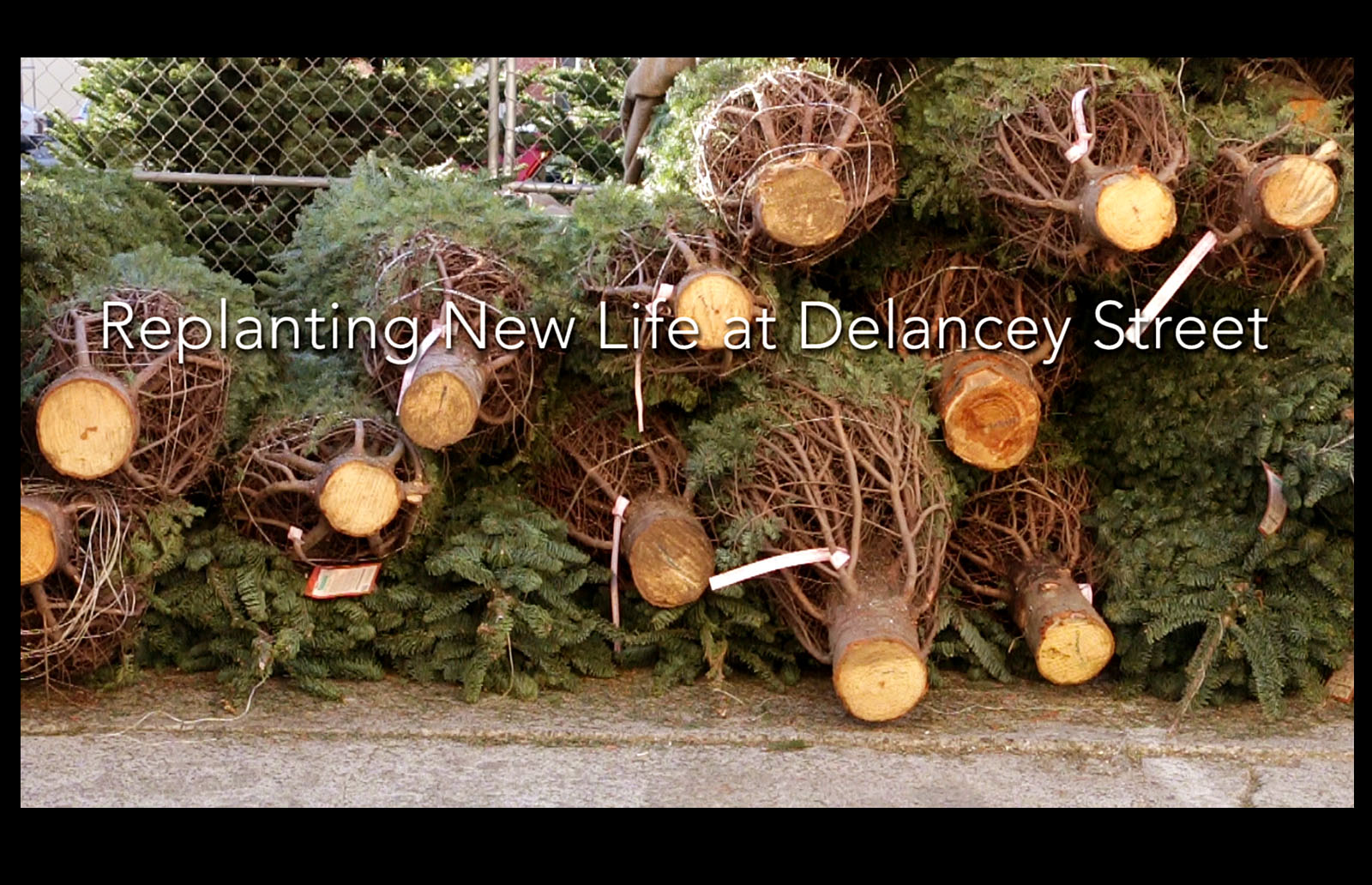 VIDEO: Replanting new life at Delancey Street