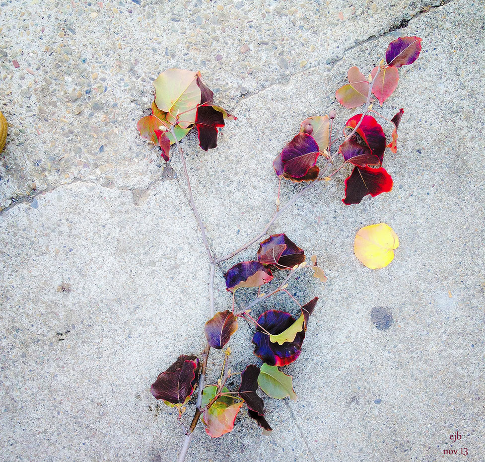 SNAP: Sidewalk Leaves