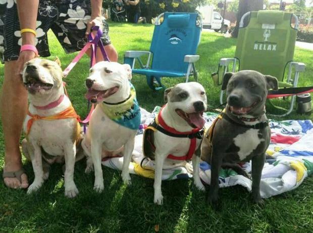 Photo courtesy of Maddie's Pet Adoption Days